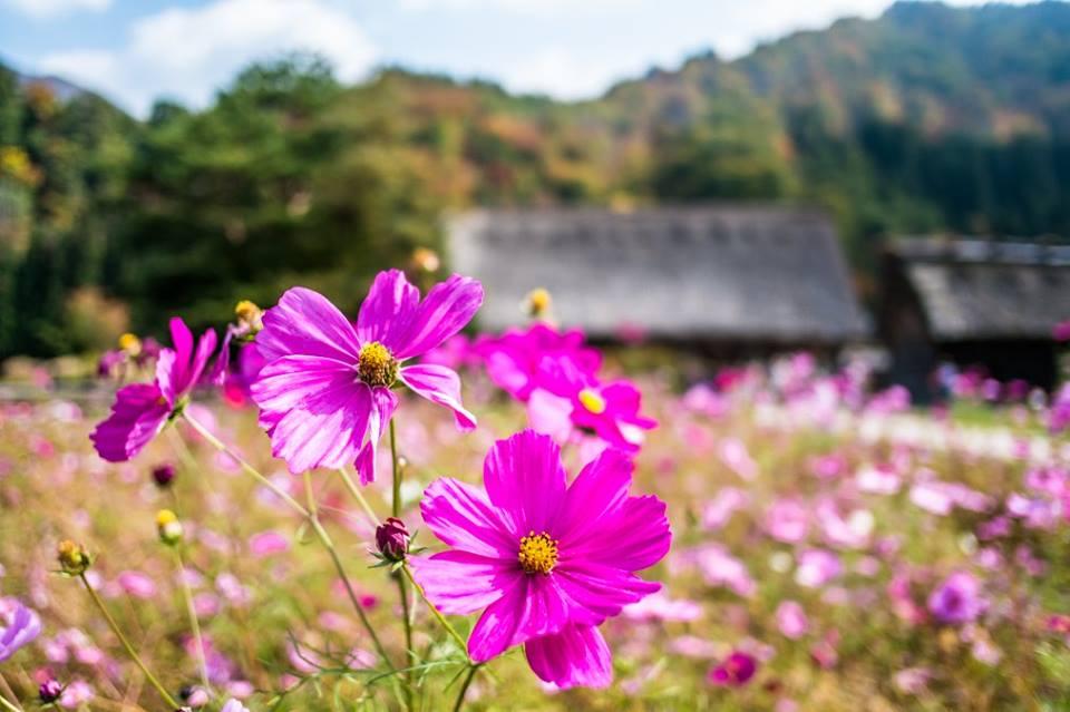 las mejores fotos de japon del fotografo de san sebastian donostia eriu photo