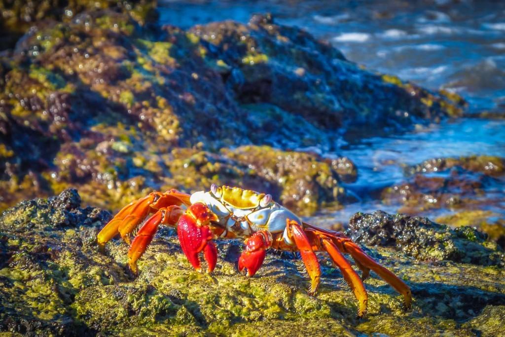 cangrejo en las islas galapagos eriu photo donostia