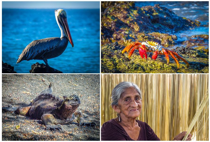 eriu photo fotografias de las islas galapagos