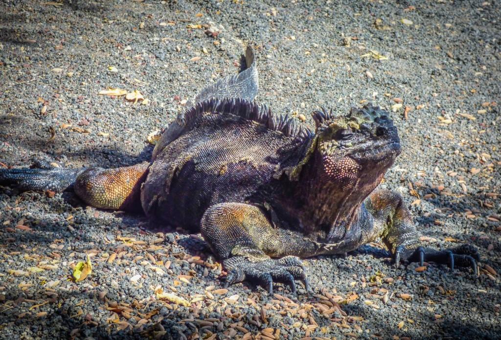 iguana fotografia de eriu photo fotografo de san sebastian donostia