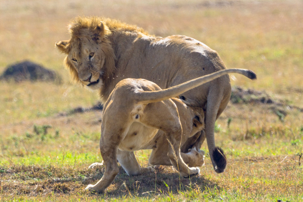 fotos de kenya masais mara eriuphoto.com fotografo donostia san sebastian