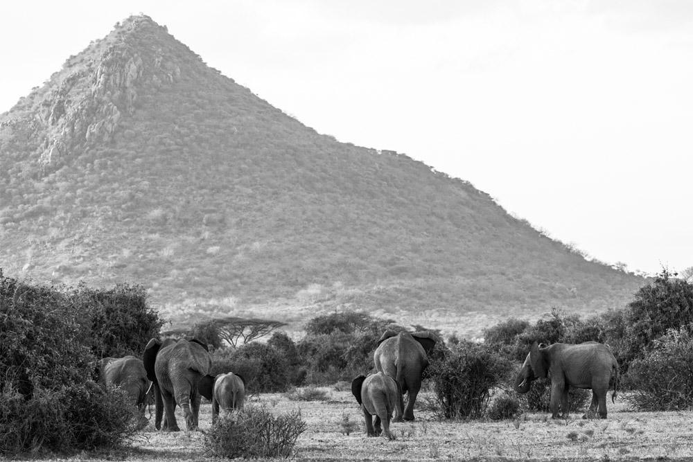 manada de elefantes en kenya . eriuphoto.com fotografo donostia san sebastian